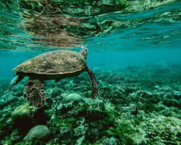 Amazing Snorkeling Locations_1