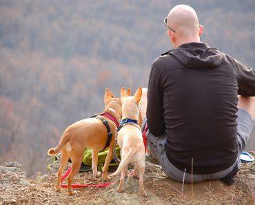 Save Money On Pet Travel