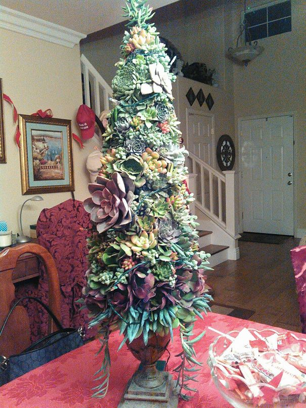 My Living Succulent Christmas Tree