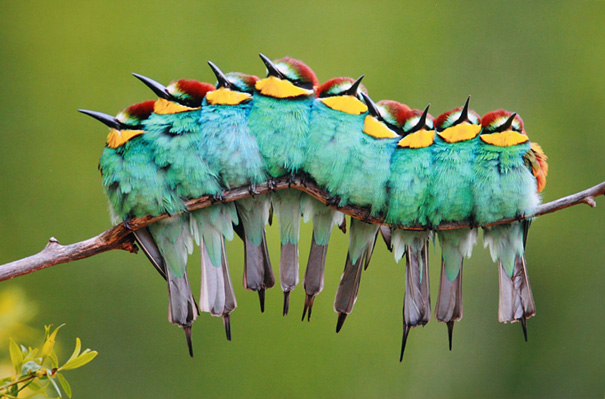 Colour And Caterpillar Together.