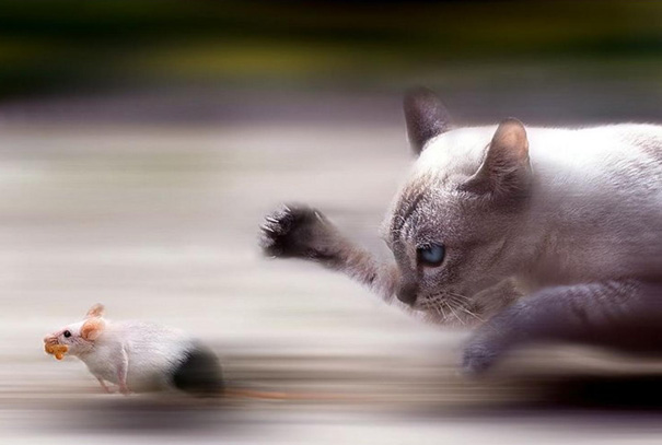 The Tom And Jerry Race Continue In Real Life Too