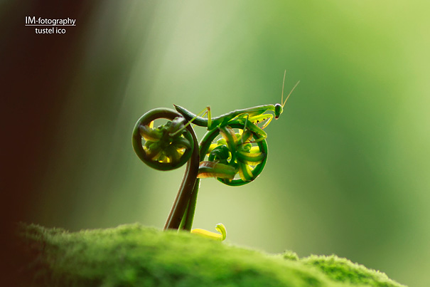 The Grasshopper's Bicycle Or A Chair To Rest.