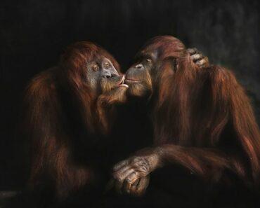 World's Most Endangered Animals
