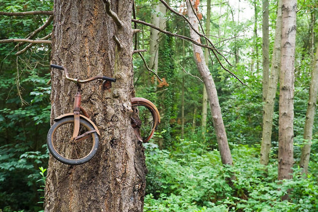 15. Bike on Vashon Island that was abandoned for 100 years