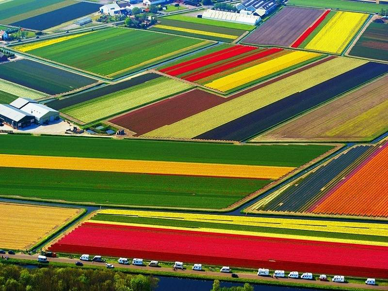 5. Dutch Flower Fields, Netherlands