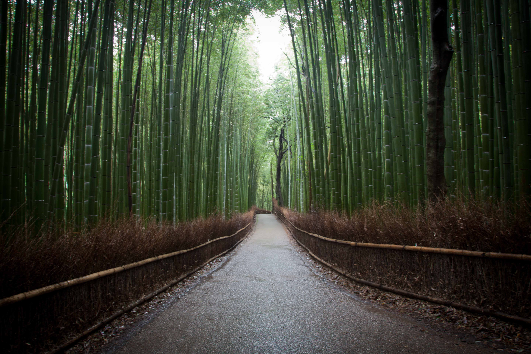 9. Bamboo Groves Of Arashiyama In Kyoto, Japan