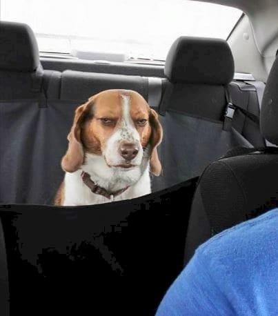 Dog-Logic_v10