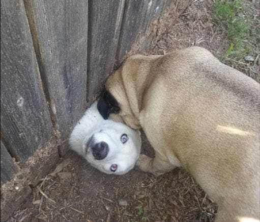 Dog-Logic_v8