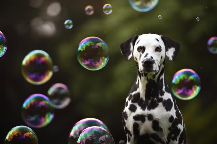 Stunning-Dog-Photos_v10