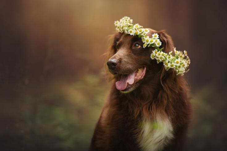 Stunning-Dog-Photos_v12