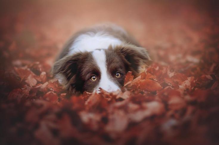 Stunning-Dog-Photos_v5