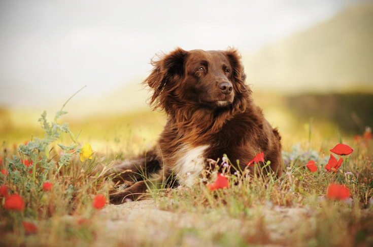 Stunning-Dog-Photos_v7
