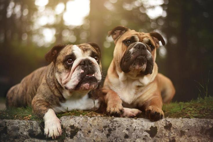 Stunning-Dog-Photos_v9