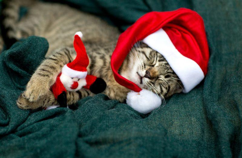 cat christmas puns