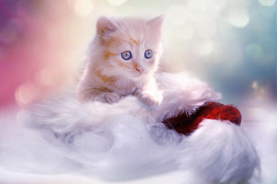 christmas cat pun