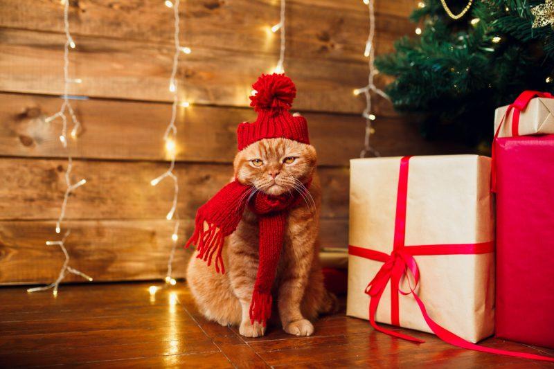 christmas cat puns