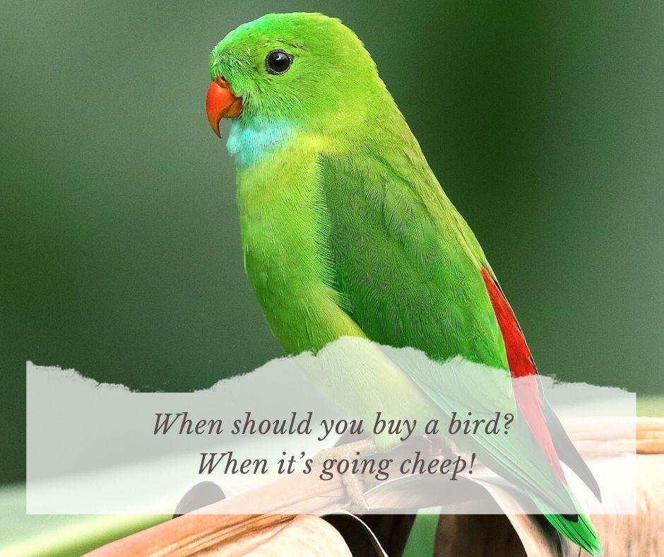 Funny Bird Puns