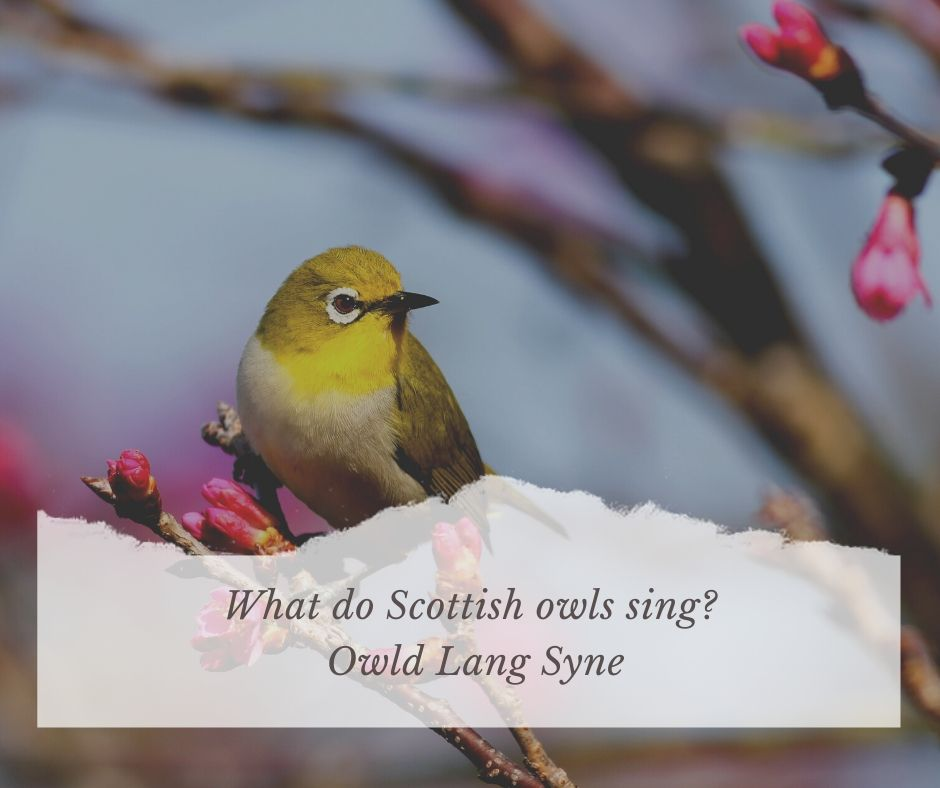 Bird Related Puns