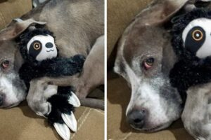 Pets Refusing To Part With Their Toys