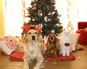 dogs at Christmas celebration