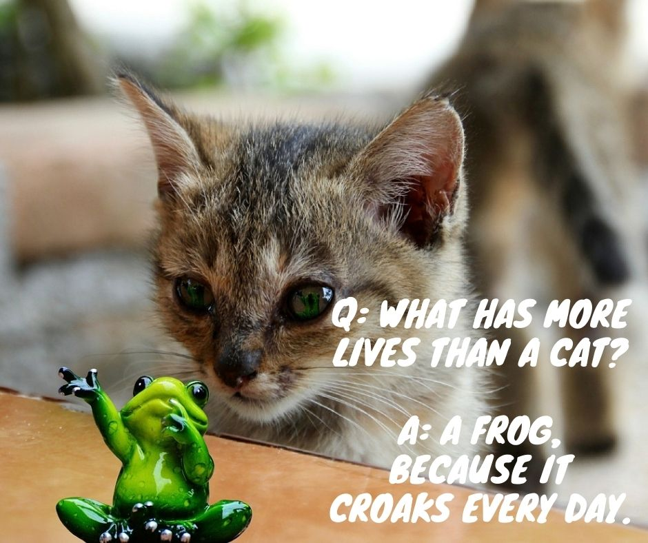 Frog and Cat