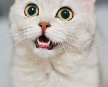 50 Hilarous Cat Puns And One Liners For You